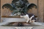Drinkende kat (Florence, Italië); Drinking cat (Florence, Italy)