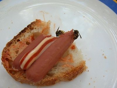 Wespen eten onze knakworst op; wasps eating our sausages