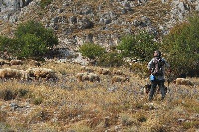 Schaapherder met kudde (Abruzzen, Italië); Shepherd with flock (Abruzzo, Italy)