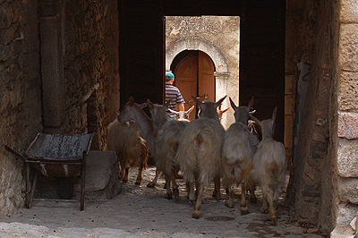 Geiten in Corvara (Abruzzen, Italië); Goats in Corvara (Abruzzo, Italy)