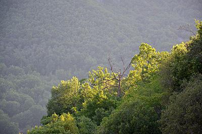 Groen dal, Fontecchio (AQ, Abruzzen, Italië); Green valley, Fontecchio (AQ, Abruzzo, Italy)