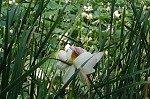 Bloemen in park Demidoff (Vaglia, Toscane); Flowers in Park Demidoff (Vaglia, Tuscany)